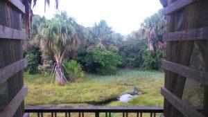Bungalow - vue du balcon